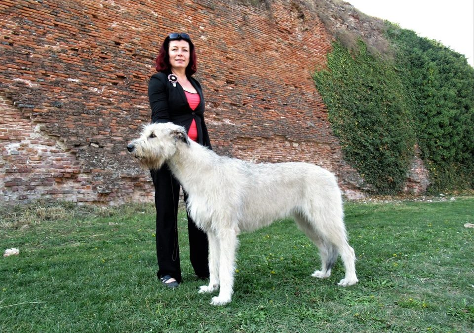 Oradea Heloween dogshow (26.10.-27.10.2019)